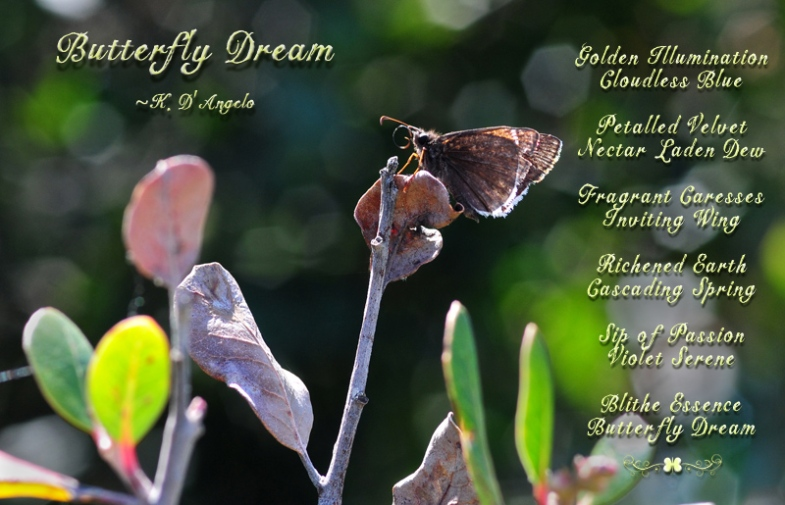Butterfly-Dream-Poem