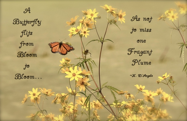 butterfly flits quote web