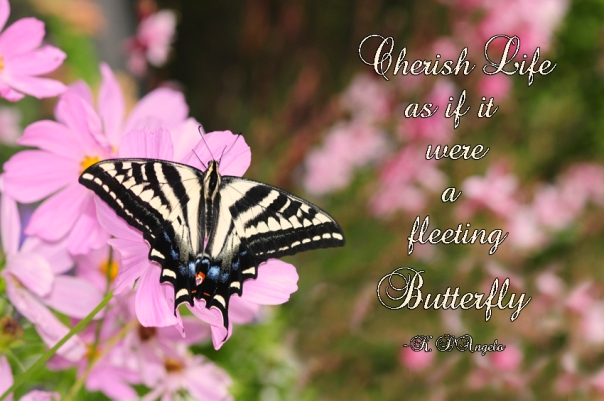 cherish life image web