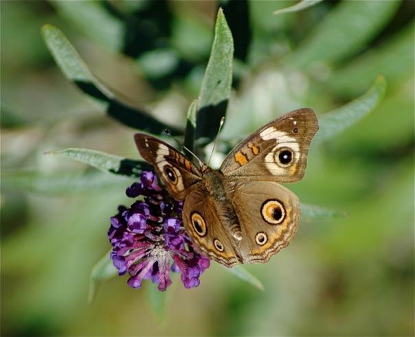 Focus on Butterflies