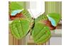 Green-Leaf-Butterfly-copy