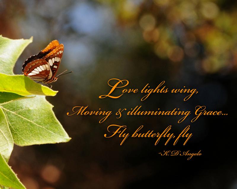 love lights wing