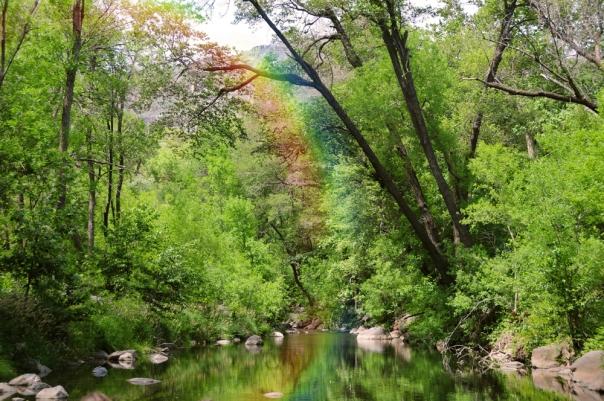 oak creek rainbow w
