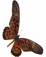 owb-butterfly1-163x200