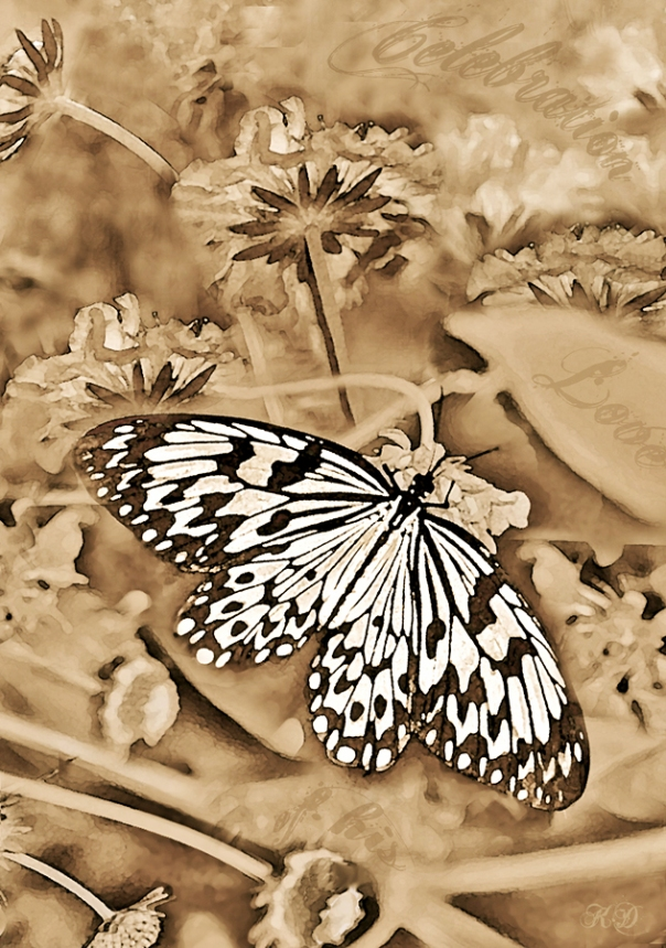 White Butterfly Print One