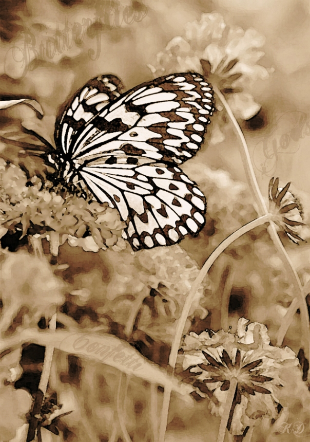 White Butterfly Print Two