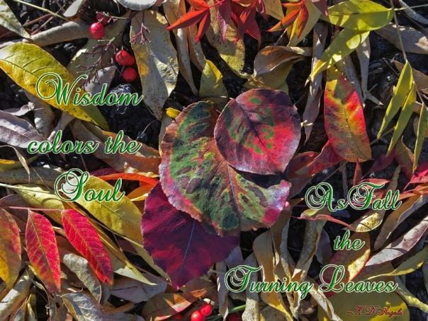 Wisdom colors the Soul quote