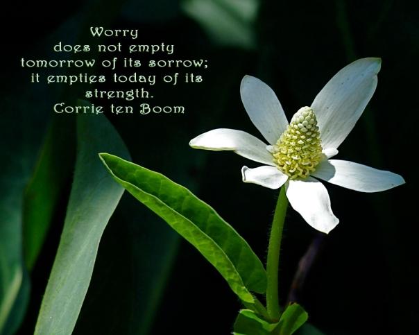 worry does not empty 8x10 DSC_4139