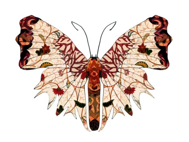 autumn_wings_butterfly