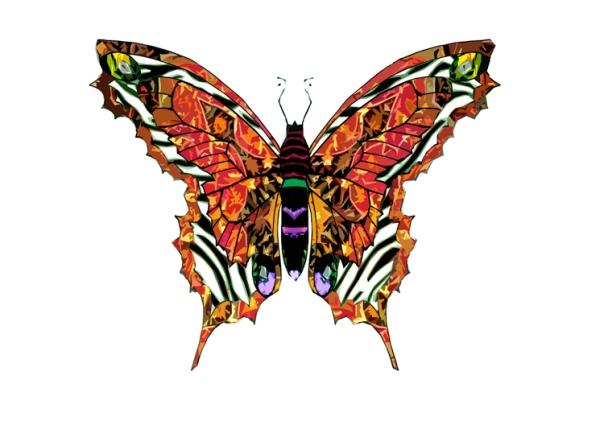 zebra_star_butterfly