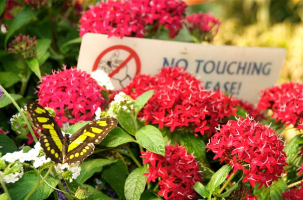 warning don't touch the butterflies please sign