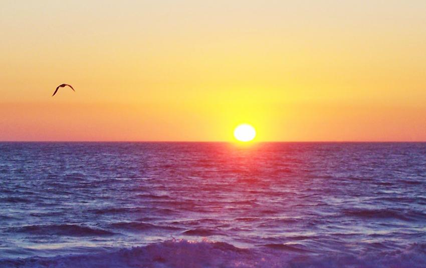 ocean sunset with bird