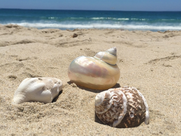 white shells by ocean sand